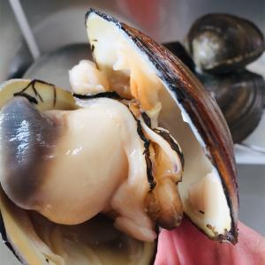ホッキ貝が美味しすぎたことと、涙の晩酌。