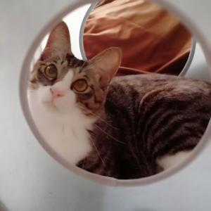 元保護猫レオ吉は、ねこのきもちのふろくがお気に入り