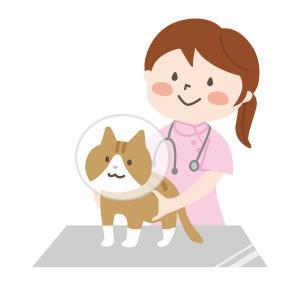愛玩動物看護師試験の受験資格には期限がある!