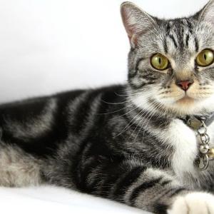 猫のおなかのたぷたぷの役割とは①