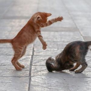 猫のおなかのたぷたぷの役割とは②
