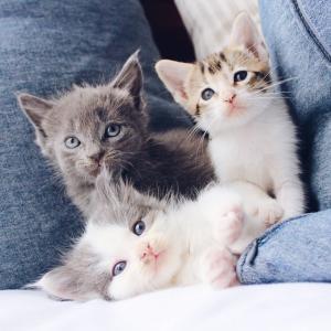 愛玩動物看護師国家試験対策⑥:水俣病の原因物質は?