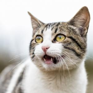 「猫踊り病」って知ってますか?