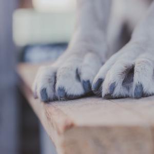 犬猫の爪切りで気をつけること!パート2