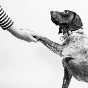 ペットから感染するトキソカラ症とは?愛玩動物看護師国家試験対策⑪
