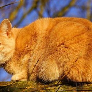 解答&解説をアップしました^^★猫の尿石症の処方食は、なにが制限されている?<第6問>
