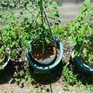 プランターでミニトマトを育てるのに失敗したあなたにオススメの栽培方法【4つのコツ】