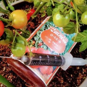 トマト元気液肥でトマトに活力!家庭菜園で10年使い続けた使用レポート【まとめ】