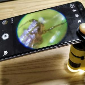 【超簡単】スマホ撮影可能なハンディ顕微鏡DXで見えない敵(ハダニ)を撮影してみた!