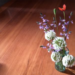 お散歩で愛でる花土産