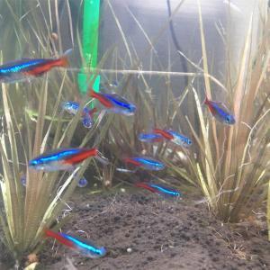 新しいペットは熱帯魚