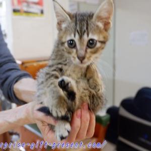岡山北区ときわ湯は猫が11匹も居る猫銭湯だった!猫好き必見!