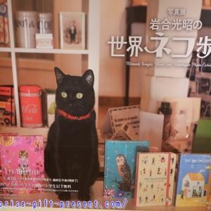岩合光昭「世界ネコ歩き2」写真展を見て来た感想!