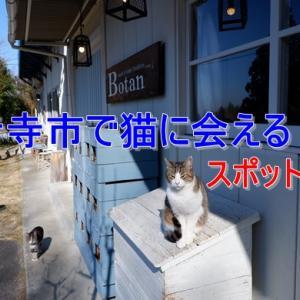 観音寺市で猫に会えるスポット3選!