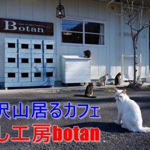 おかし工房botanは猫好きさんにはたまらない秘境カフェ!
