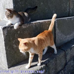 琴弾八幡宮は猫と御朱印と砂絵を楽しめるパワースポット!
