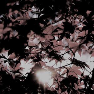 映画『麦秋』の解説・感想レビュー:欠落を埋めるために