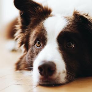 【愛犬家・犬好き目線】犬種から選ぶ!おすすめの映画12選