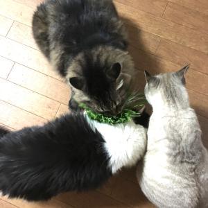 猫草買ったら、犬が来た??