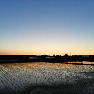 田んぼの景色が、心のフィルターを変えた