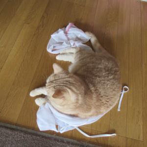 洗濯ネットな季節