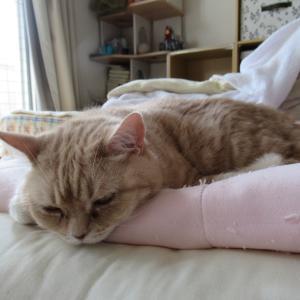 よく寝る子