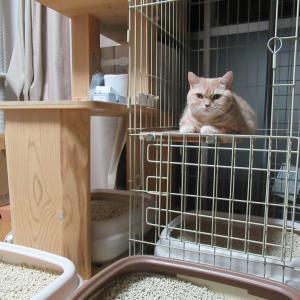 おからの猫砂