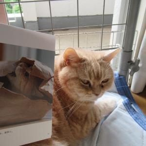 たたかう猫