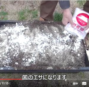 【堆肥の作り方】『菌活ぼかし堆肥』作ってみた 市販の堆肥が再発酵で耐病性パワーアップ
