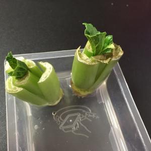 小松菜リボベジ