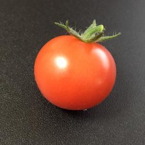 記念すべきミニトマト収穫!