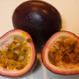 パッションフルーツの種から芽が出たよ