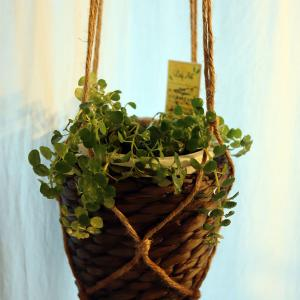 室内用ハンギングバスケット(吊り下げ植木鉢)で蒸れてしまうのをどう回避する?