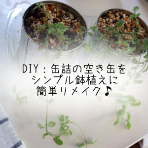 DIY:缶詰の空き缶をシンプル鉢植えに簡単リメイク♪