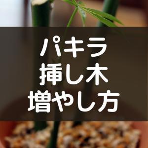 簡単!パキラを挿し木で増やす方法。成長点に気をつけよう