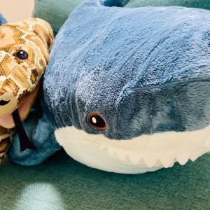 IKEAでサメちゃんとニシキヘビくんを連れ帰ってきた🦈🐍