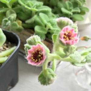 植物たちの事件のその後リポート ガラスに腰の持ち主必見です