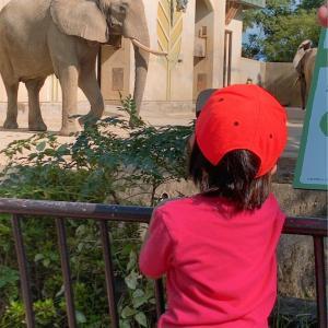 【動物園】動物園に行った話