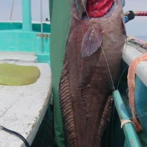 <06/20> ベニアコウ釣り