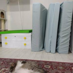 ミニマリストの布団収納|我が家の暫定布団置き場紹介&我が家改造計画