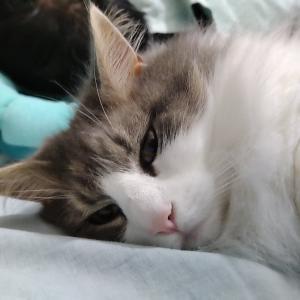 猫と朝の挨拶|幸せな土曜日のはじまり