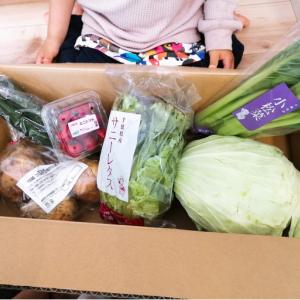 コープデリの野菜セット「グリーンボックス」や産直野菜セットの口コミ!実食レビュー!
