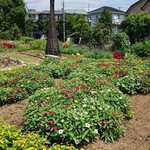 夏花壇にむけて(6)