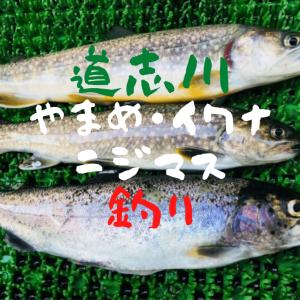 【奇跡!】道志川でヤマメ・イワナ・ニジマス釣り【釣果報告】