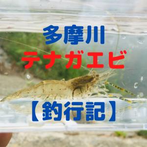 【2020年】多摩川テナガエビシーズン突入?!場所は?【釣果】