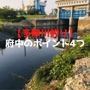 【多摩川釣り】府中のポイント4つ紹介【府中釣り歴20年の僕が教える】