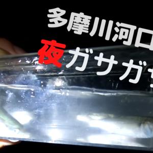 【2020年】多摩川河口でガサガサ【テナガエビ・ボラ・ハゼ・カニを捕獲】
