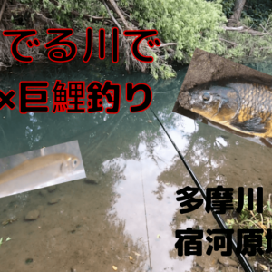 【2020年】狛江市の多摩川でのべ竿で巨大鯉を狙う!