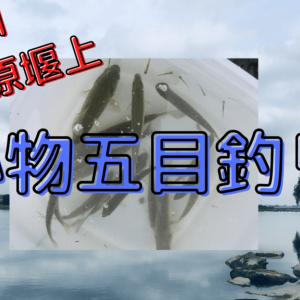 【多摩川宿河原堰釣り】初心者にもオススメな場所で五目釣り!