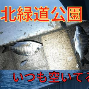 【有明北緑道公園で釣り!】チビクロダイ、セイゴの釣果【2020年】